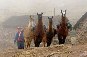 Lares Valley Trail to Machu Picchu 4D/ 3N