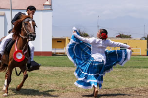 Peruvian Paso Horses and Marinera