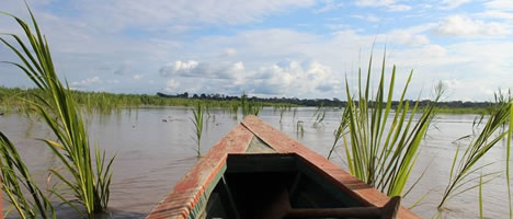 Iquitos Jungle Tour 2D / 1N