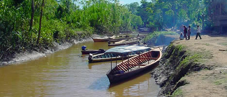 Tambopata Ecological Adventure 4D / 3N