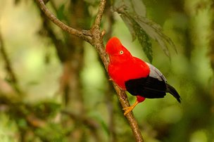 Tambopata Eco Bird Watch 3D 2N