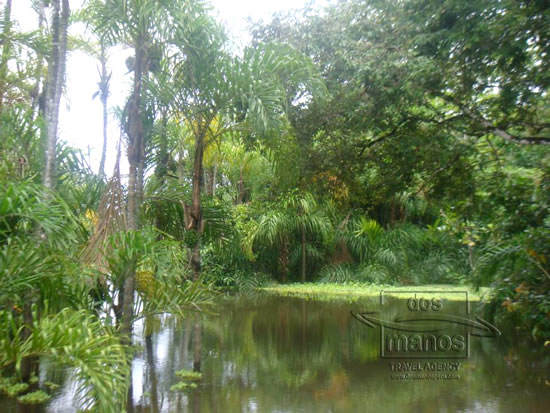 Iquitos Jungle Tour 5D / 4N