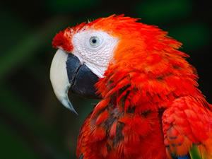 The Peru Rainforest: 6 Amazing Reasons to Choose the Amazon