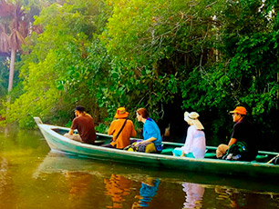 Amazon Tours in Tambopata: The Ultimate Jungle Experience in Peru
