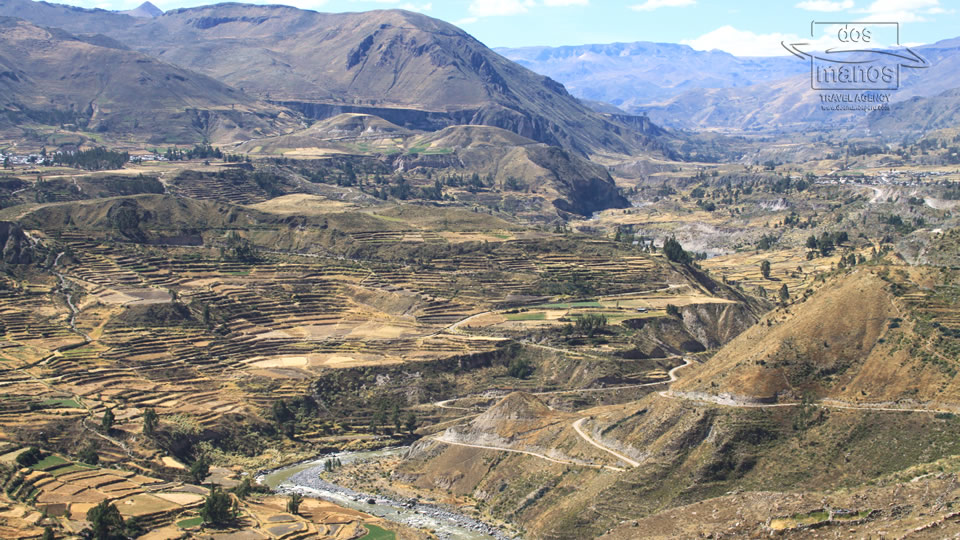 Terraces of Colca Canyon, Arequipa