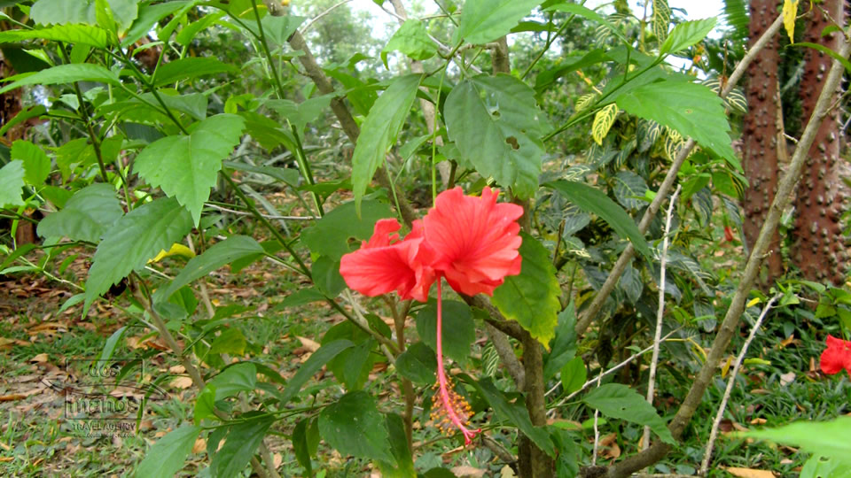Flora Y Fauna Del Perú: Flora In The Rainforest