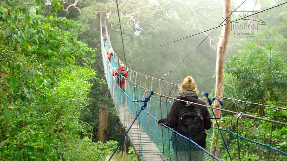 Hanging bridge Tambopata