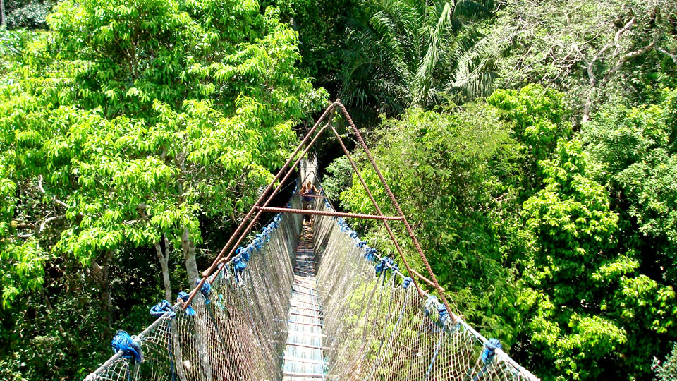 Hanging bridge in the Jungle
