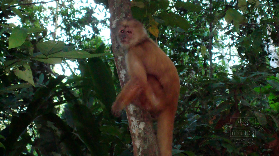 Getting close to the Monkeys of the Rainforest on the Tambopata Tours