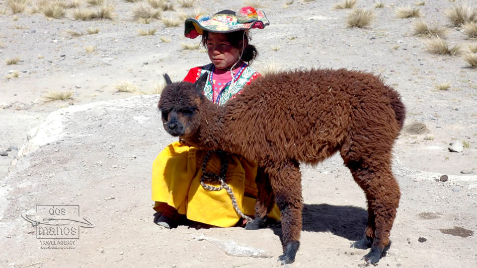 Young girl with lama in Peru